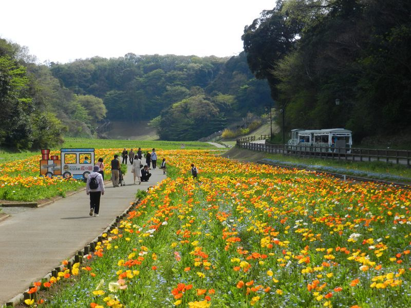 kurihama-flower-park Yokosuka